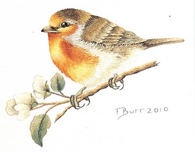 European_robin